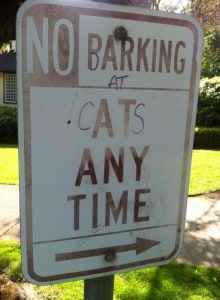 Barking at Cats